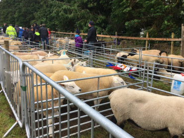 25th Annual Sligo County Agricultural Show takes place this weekend