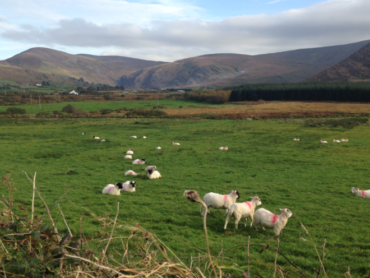 Concern over dogs without leads in Gleniff Horseshoe area of north Sligo