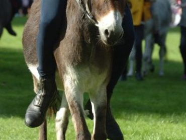 Call for local Donkey Derby events to be banned