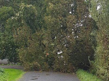 Call for fund to survey and cut overgrown trees and bushes along roads