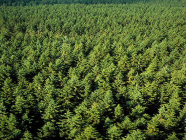 Farmers at 'breaking point' due to delays in forestry applications