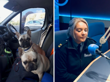 Garda appeal after two French Bulldogs stolen at Glencar Waterfall