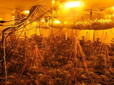Gardai discover grow house in Leitrim with €240,000 worth of suspected cannabis plants