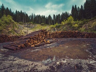 Forestry Appeals must be fit for purpose