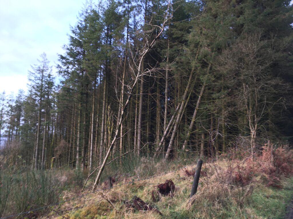 Forestry on Kilronan Mountain