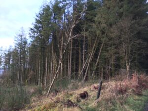 Forestry on Kilronan Mountain