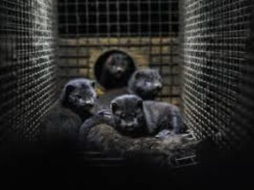 Bill to ban fur farming